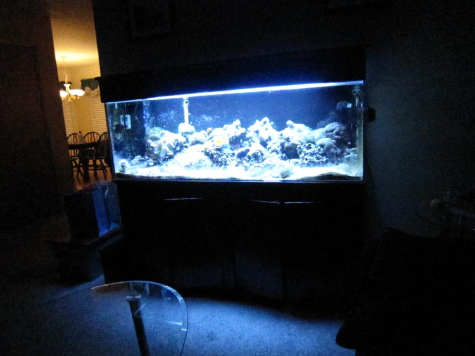 who has an aquarium?-bros-tank-1.jpg