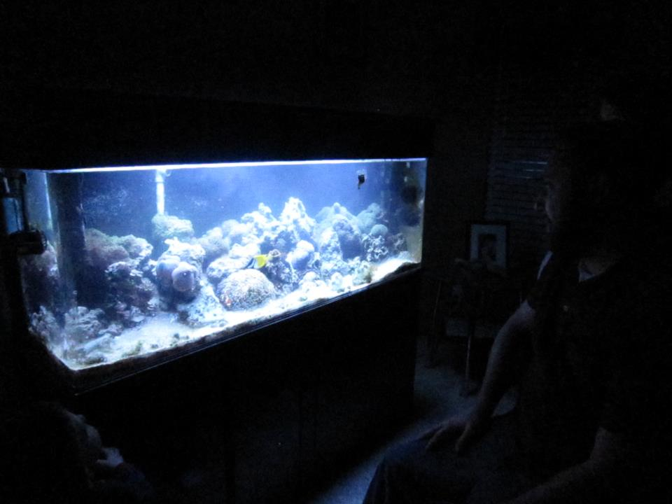 who has an aquarium?-bros-tank-2.jpg