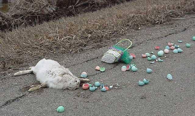 Easter Bunny Road